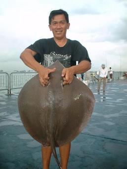 10kgstingray160607