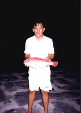 2-2kg-red-snapper
