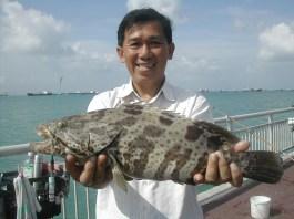 2-4kg-grouper
