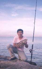 2-5kg-spot-grouper