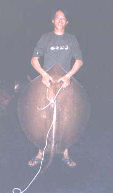 LK with his 33kg Long Tail Brown Stingray