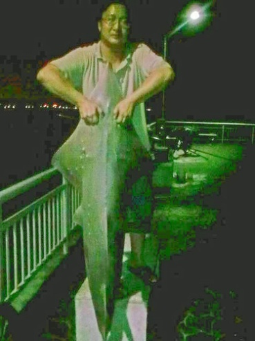 31_kg_shovelnose_shark_15_aug_375x500