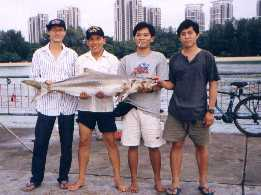 4-on-cobia20
