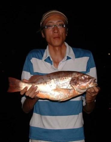 1.7 kg Fingermark Snapper caught by Allan Chan