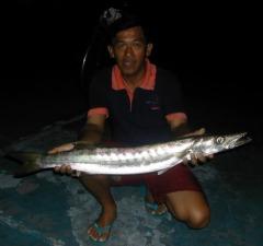barracuda4kg