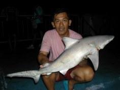 Black tip shark