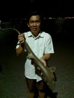 Lizard shark