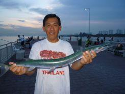 gaffish090710_500x375