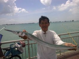 garfish_500x375