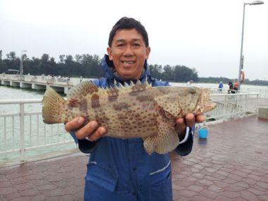grouper1.7kg_500x375.jpg