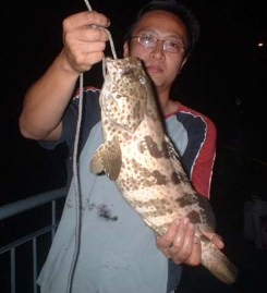 2 kg plus grouper caught just below the jetty