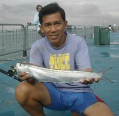Wolf herring