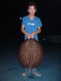 youngf-leopardray12kg141005