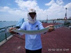 Gar fish